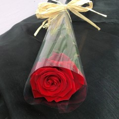 beautiful single rose